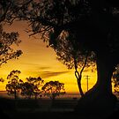 Sunrise at the campsite by Clare Colins