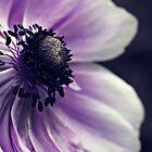 Anemone by Karen Tregoning