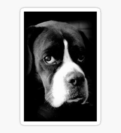 Arwen - Weiblicher Boxer-Hund - Boxer-Hunde-Reihe Sticker