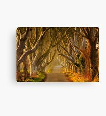 The Dark Hedges  Game of Thrones County Antrim  Northern Ireland Canvas Print