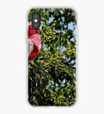 Rose-breasted cockatoo iPhone Case