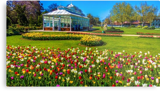 Tulips in Full Bloom at the Conservatory - Bendigo, Victoria by sjphotocomau