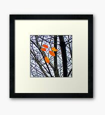 Five Orange Leaves Framed Print
