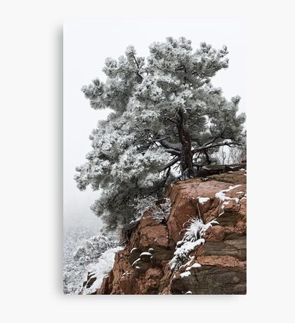 Snowy tree on red rock Canvas Print