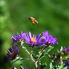 The bee and the Aster by jodi payne