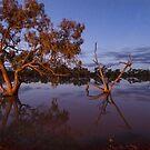 Cardenyabba Lagoon by Malcolm Katon
