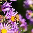 Busy bee by jodi payne