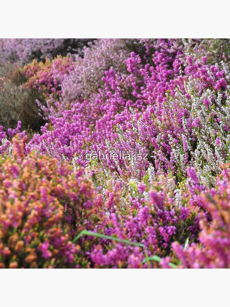 Lavender field by gabriellaksz