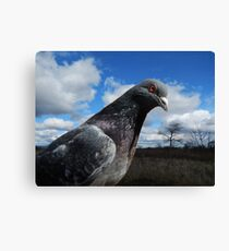 Pigeon. Canvas Print