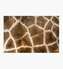 Giraffe Skin Closeup Photographic Print