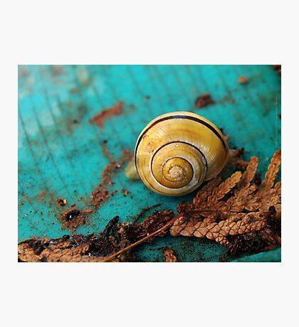 Yellow Snail House VRS2 Photographic Print
