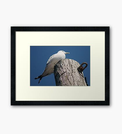 With Crossed Tail Feathers Framed Print