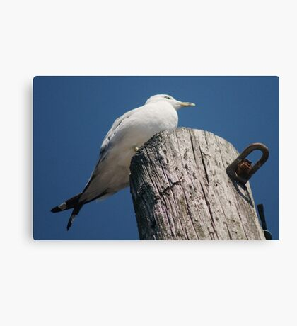 With Crossed Tail Feathers Canvas Print