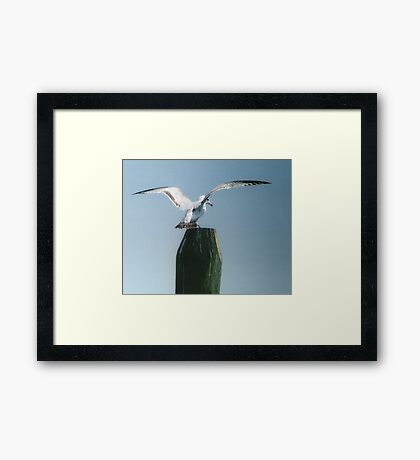 Perching Seagull Framed Print