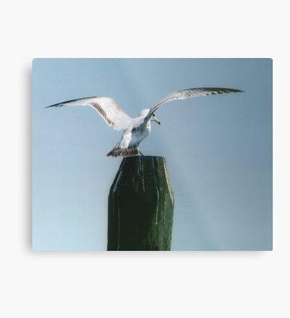 Perching Seagull Metal Print