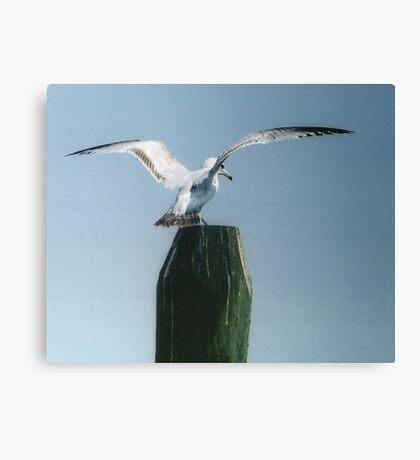 Perching Seagull Canvas Print