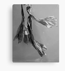 Dried Blooms Metal Print