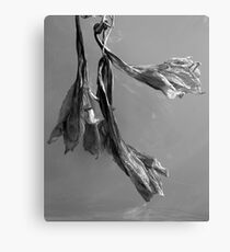 Dried Blooms Canvas Print