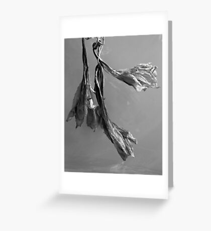 Dried Blooms Greeting Card