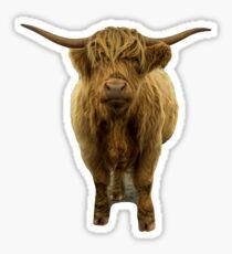 Saggy Highland Cow II Sticker