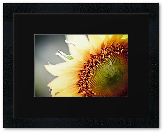 Sunflower by Jen Wahl