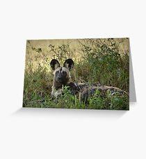 Wild Dog Greeting Card