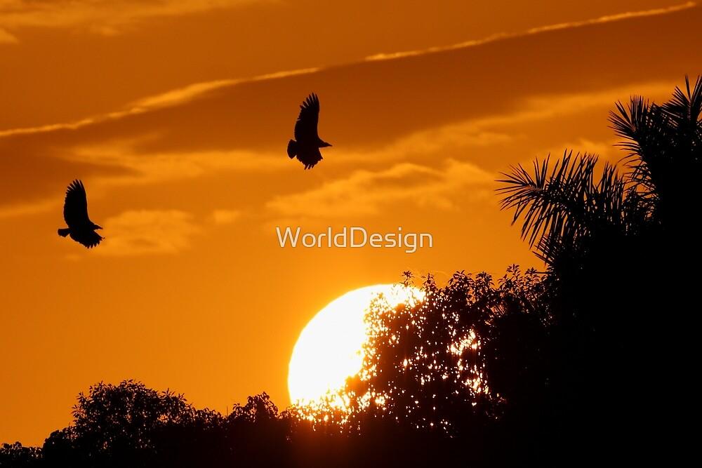 Everglades Sunset by WorldDesign
