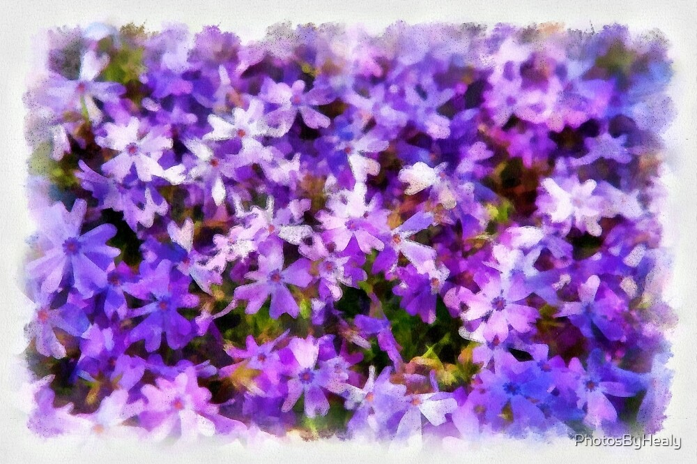 Creeping Phlox watercolour by PhotosByHealy