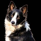 KLIPPIES, ONE OF MY SIX BORDERCOLLIES by Magriet Meintjes