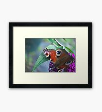 Butterfly Closeup Framed Print