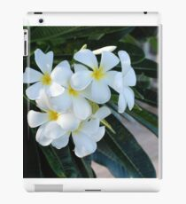 Frangipani or Yellow and White Plumeria flowers, Barbados, WI If you like,! purchase, try a cell phone cover thanks iPad Case/Skin