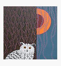 Owl Portrait Photographic Print