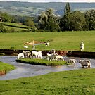 Landscape with cows (France) by Peter Voerman