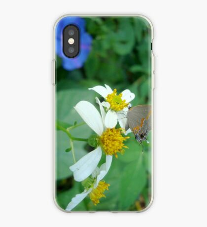 Banded Hairstreak in Spanish Needles iPhone Case