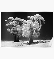 Trees in IR Poster