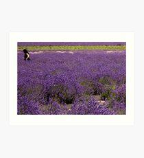 Girl in field of lavender Art Print