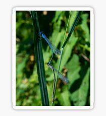 Blue Dragonflies  Sticker