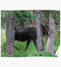 Moose in the Woods Poster