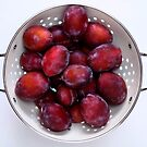 Plums with bloom in a white glazed colander. by coffeeflavour