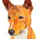 Basenji - color tan. African dogbreed by doggyshop