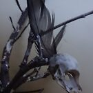 First dead bird skull burning with a black flame feather by edend