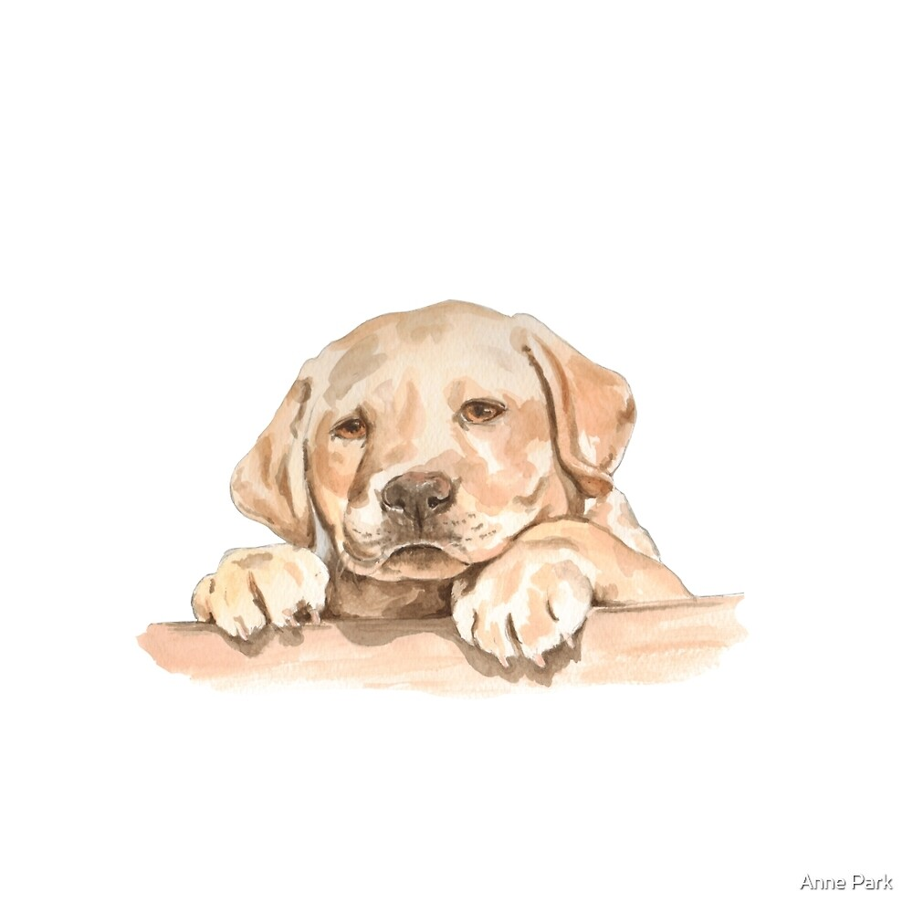Golden Labrador Puppy  by Anne Park