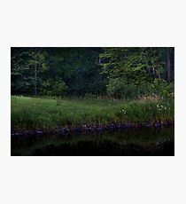Forest by the Stream Photographic Print