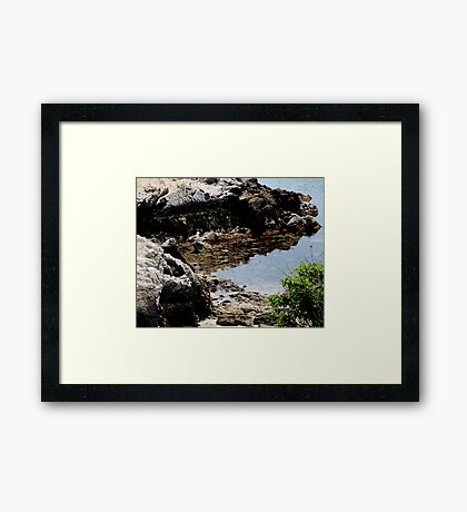 Master of the Cove Framed Print