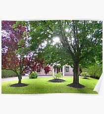 The Beauty Of Trees Poster
