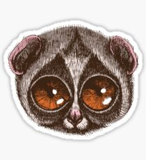 Slow Loris Sticker