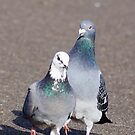 couple by flashcompact