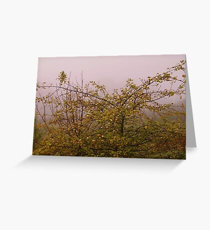 Foggy morning apple tree Greeting Card