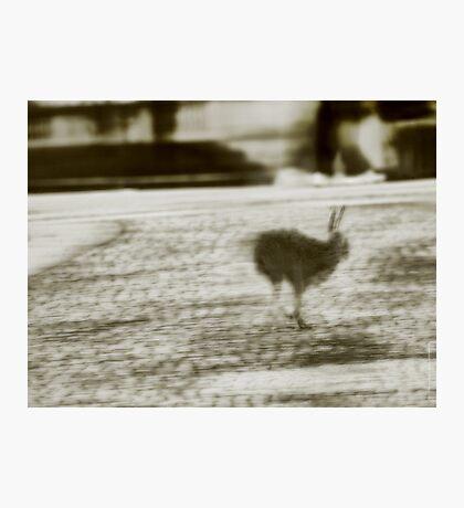 City Hare seeking Refuge VRS2 Photographic Print