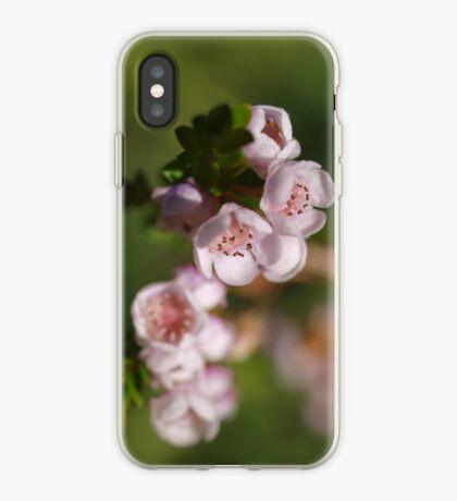 Chamelaucium (2) iPhone Case